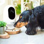 wifi-spy-pet-spy-camera-food-dispenser-live-video-streaming-south-africa.jpg